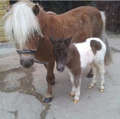 Bonnie and foal