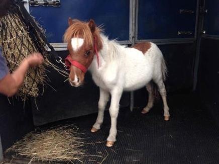 Rescued foal